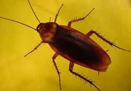 كيفية التخلص من الحشرات في الحمام